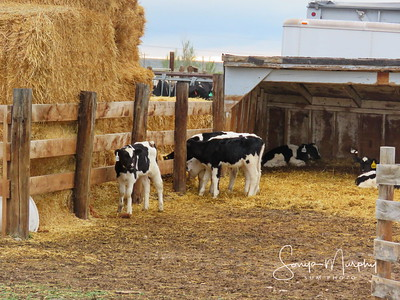 Farm Animal Gallery