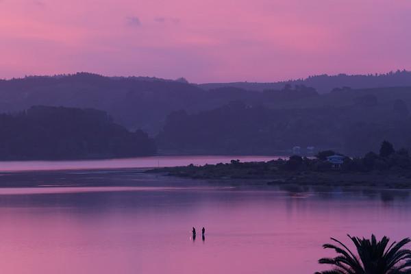 Evening Moods in NZ