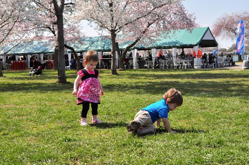 Cherry Blossoms 2014 033.jpg