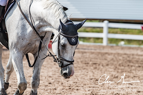 Halcyon at Lake Placid Horse Show - June 2018
