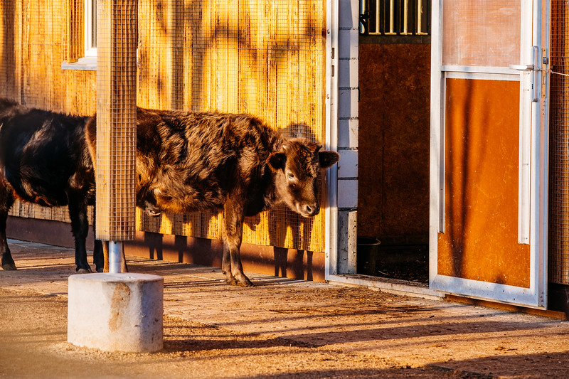 Tonis Zoo-0205.jpg