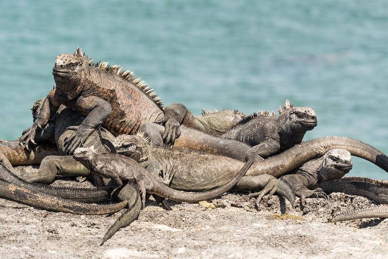 Galapagos-Best-054.jpg