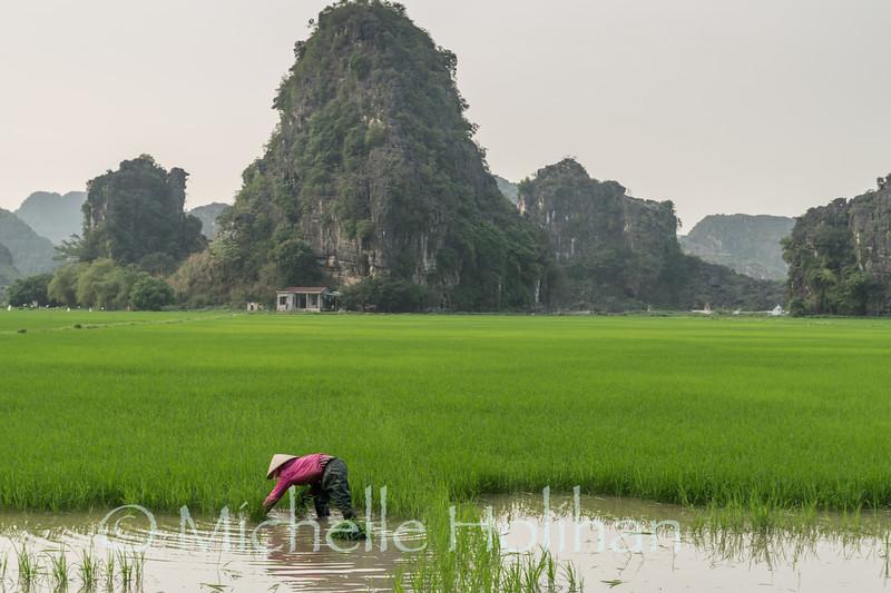 Rice Farmers, Hang Múa, Ninh Binh, Vietnam