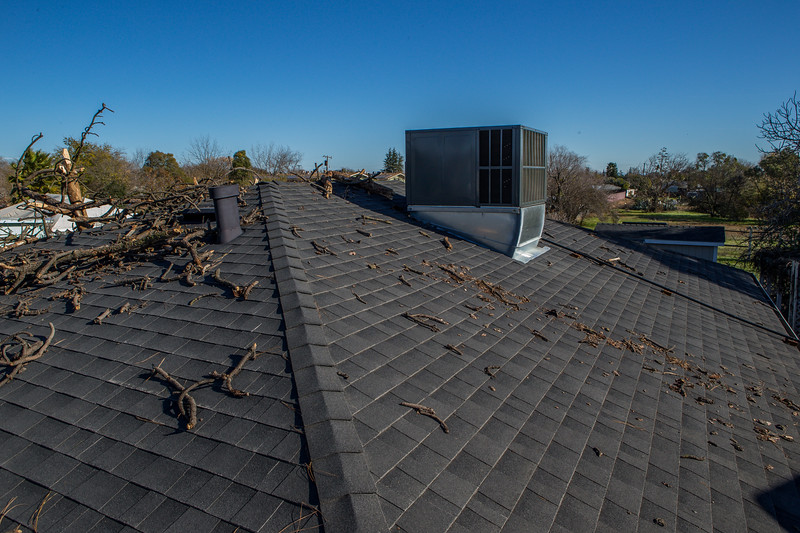 5671 Wallace Ave - Tree 1030am 12 16 2017 Extremly Windy Conditions-75.jpg