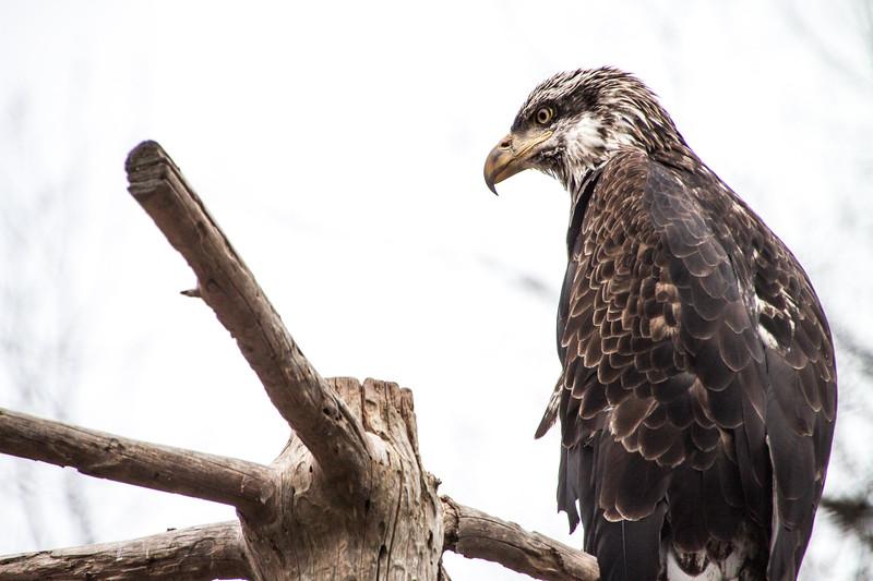 Elmwood Zoo-6425.jpg