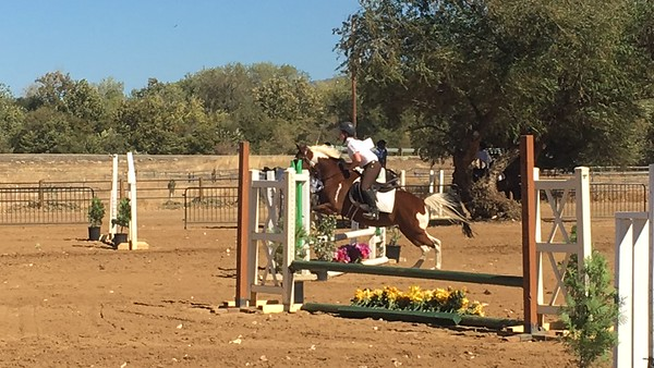 Horse Shows and Schoolings