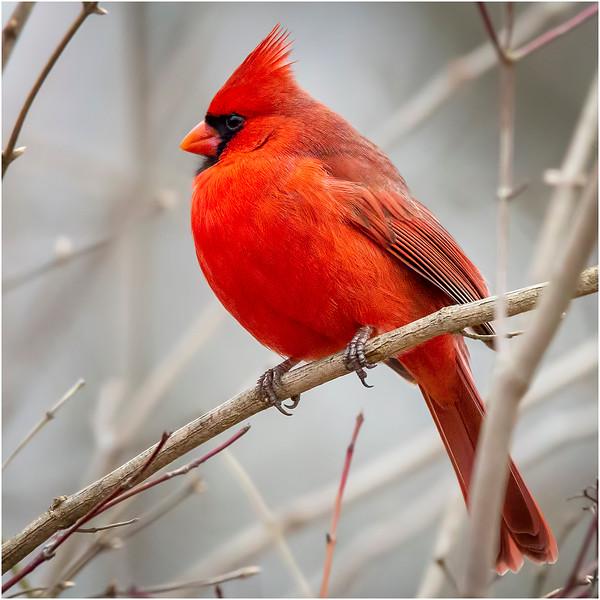 Avian.jpg