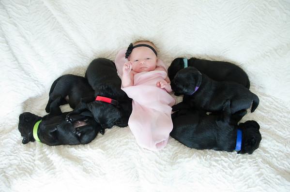 Stella & 6 Puppies