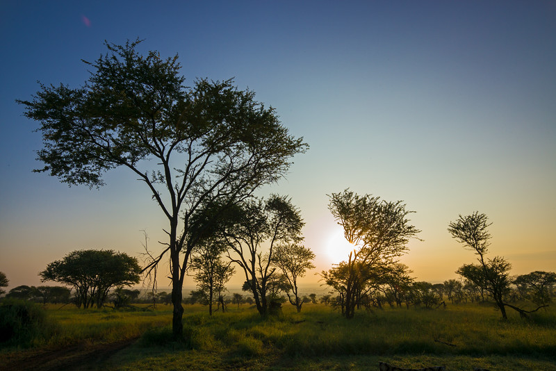 Serengeti sunrise 2.jpg