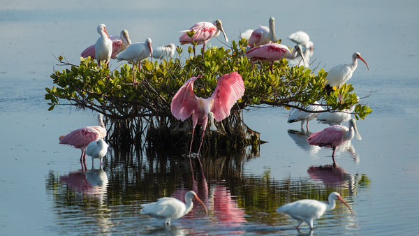 Best of Everglades NP and Florida Wetlands