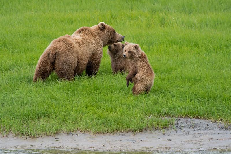 Alaska-9711.jpg