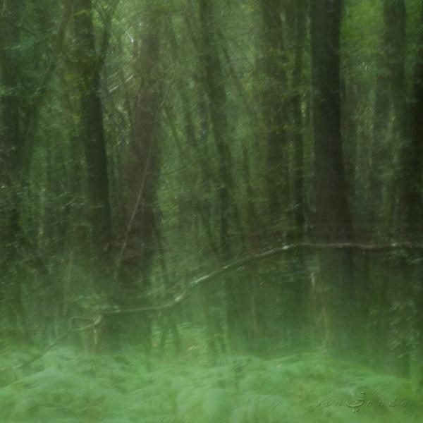 Espíritus del bosque. La fôret de Broceliande VI