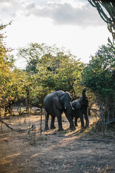 2019_06_24_Global_Malawi_ASJ_D01_Safari-36.jpg