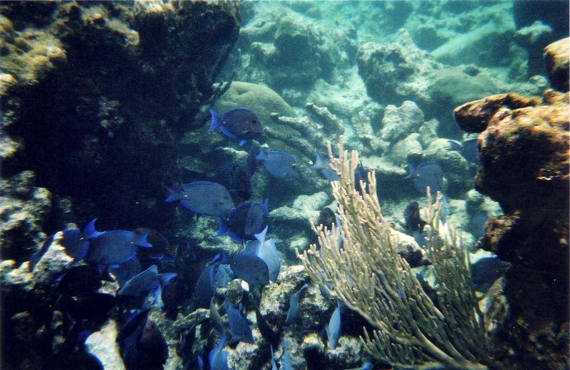 blue_fish.jpg