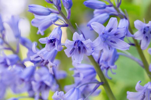 Flowers, Garden & Macro