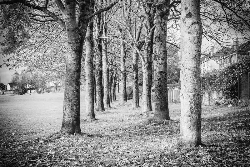 Lliswerry Pond & Park -34B&W.jpg