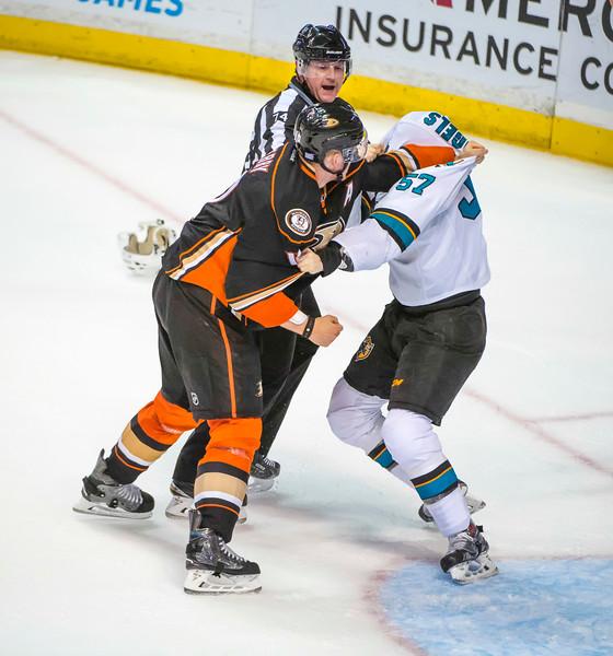 Ducks v Sharks-14.jpg