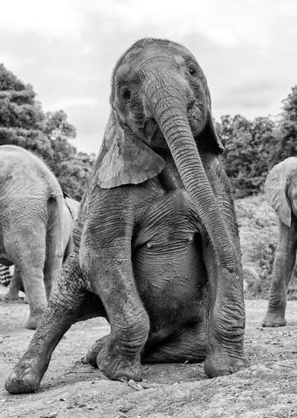 Aug312013_nairobi_blixwen_elephant_2349.jpg