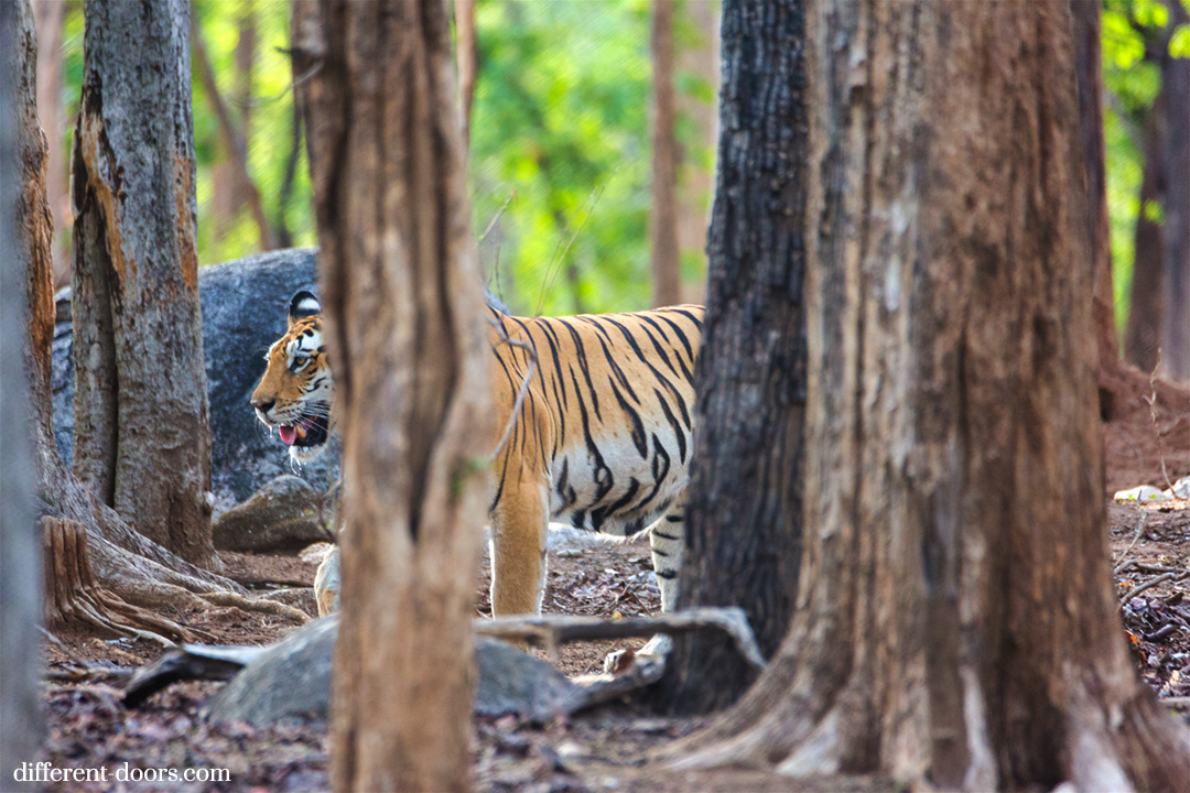 Pench Tiger Reserve