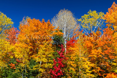 Fall Foliage Forests