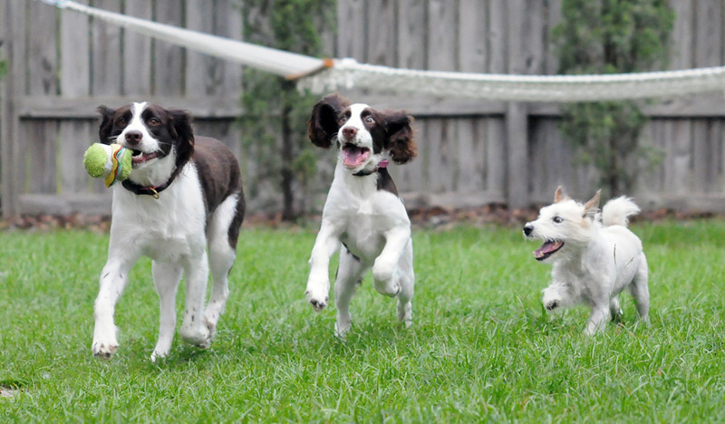 August 2010 _ Dogssmall.jpg