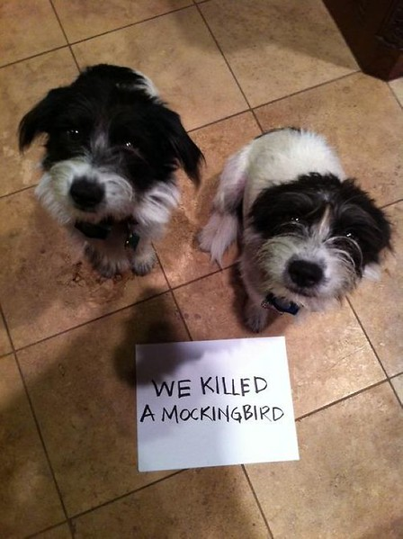 Guilty-Dogs-With-Written-Signs-11.jpg
