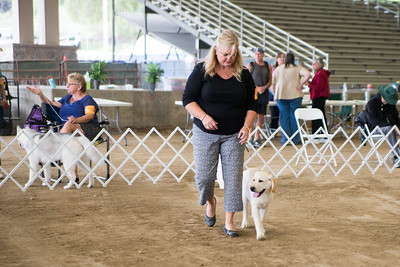 2019 Santa Ana Valley Kennel Club Match - Sporting Group