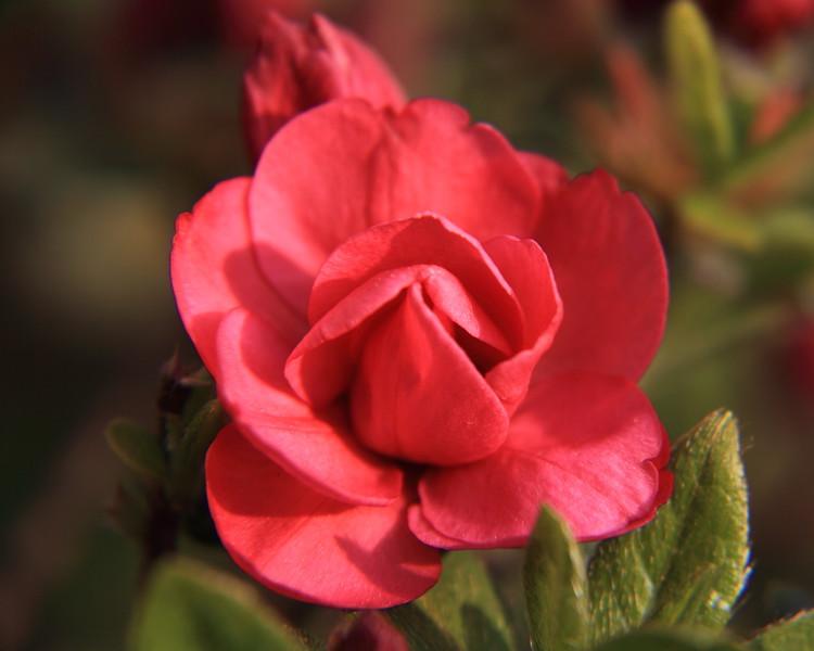 130414_IMG_1754R1A_6321_Blossoms.JPG