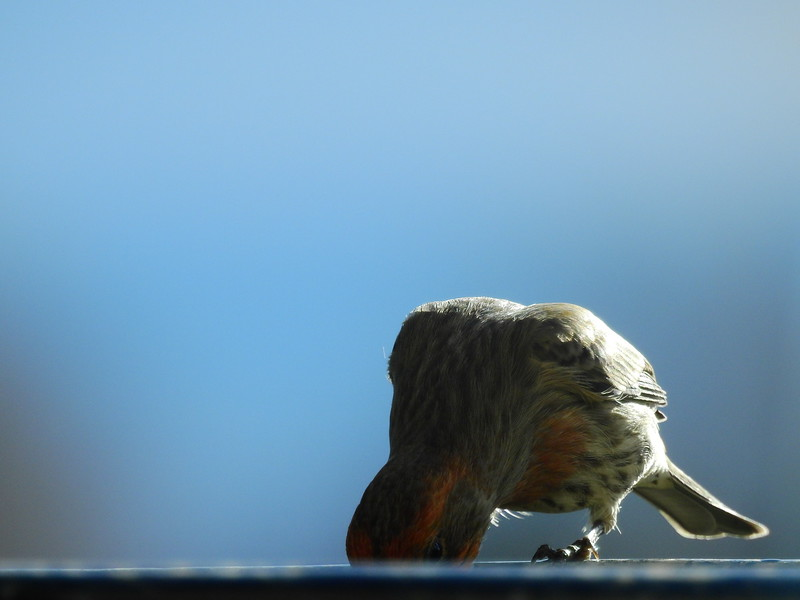 birds (189).JPG