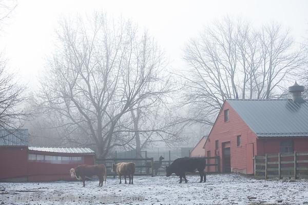 170120 - snow and fog