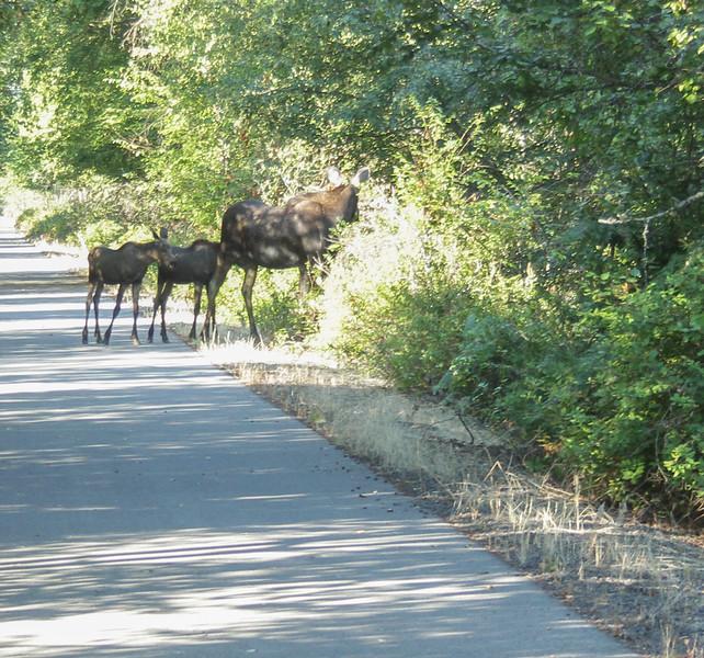 bike trail-6344.jpg