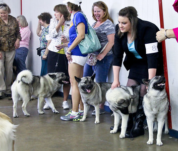 2014-05-10 Denton Dog Show