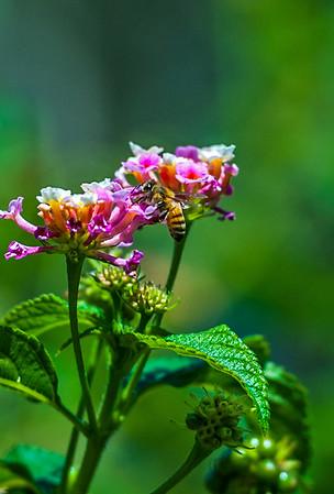 Butterflys 7.20.14