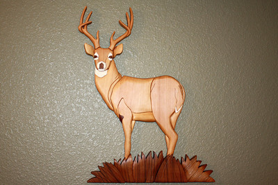 White-Tail Buck Deer in Grass for David