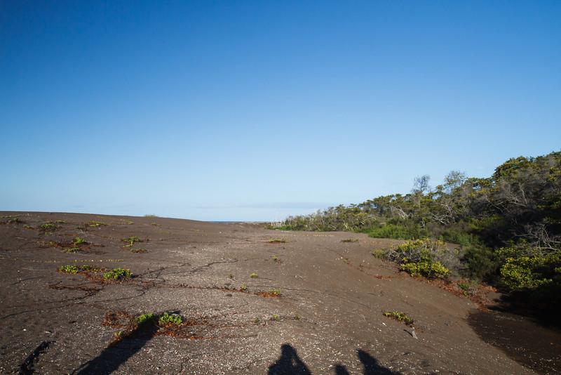 Playa Tortoga Negra, Isabela, Galapagos (11-24-2011)-3.jpg