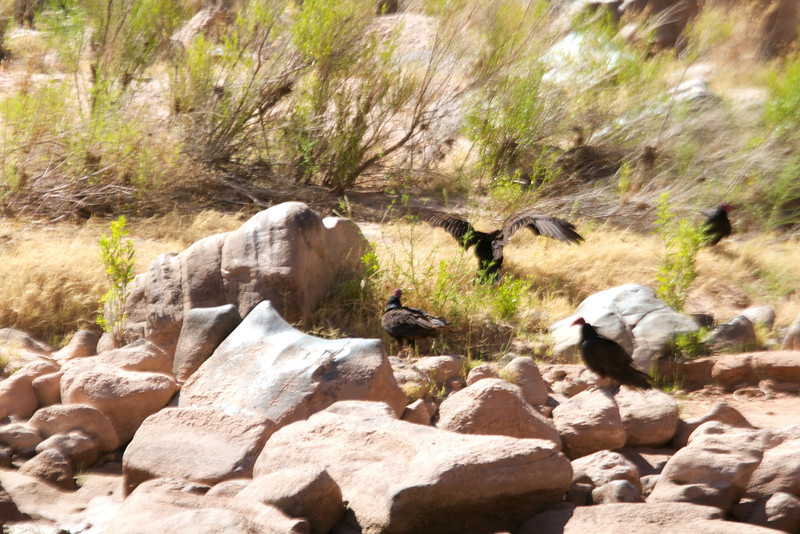 2014_Grand_Canyon_WHDW2_7D 58