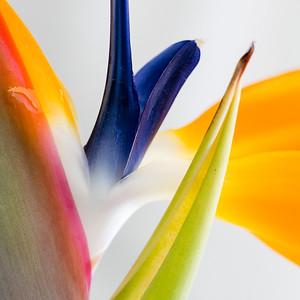 Portfolio Color