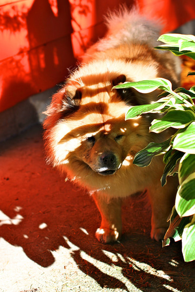 Lillian after our walk...I am still loving our orange house color.  Look at the glow in those shadows