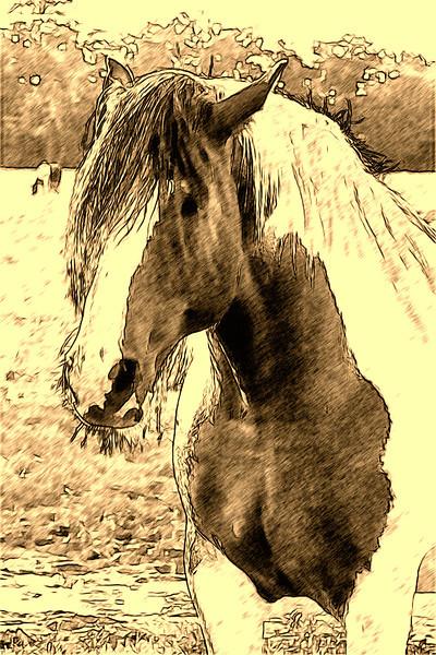 Cowtown Pasture Horses