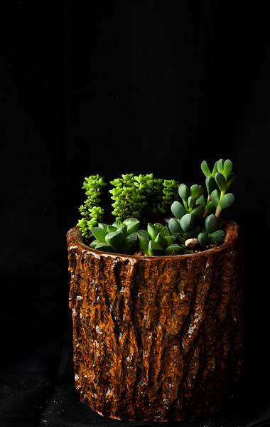 succulent-8568.jpg