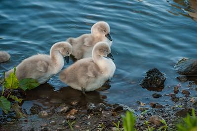 Wildlife, Stirling University