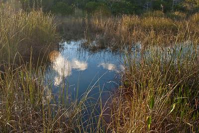 Florida 2009: Everglades National Park