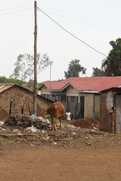 Kenya Part1 '15 875.JPG