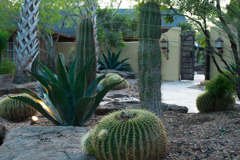 htx-cactus-space027.jpg