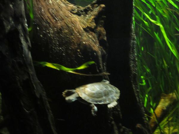 Sydney - Sydney Aquarium