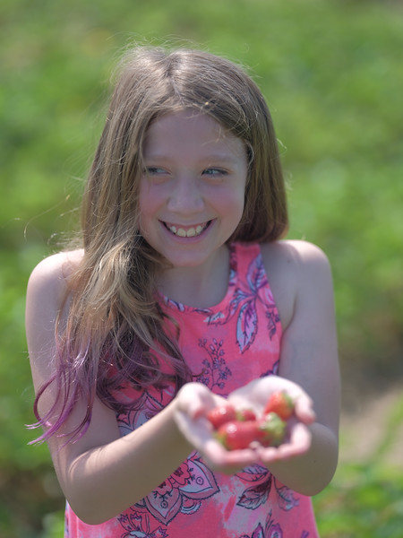 June 17, 2018 - Strawberry Picking for Fathers Day-217.jpg