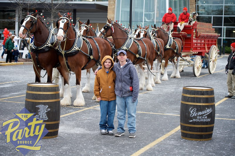 Clydesdale Portraits 54.jpg