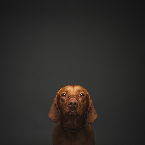 Pets_AKilbee_018.jpg