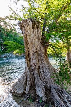 Guadalupe River State Park - Fri, Mar 31, 2017