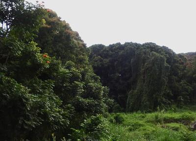 Lahaina, Maui Hawaii
